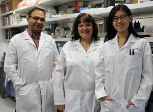 Husheem Michael (first author), Christine McCusker (senior author) and Di Xue (co-author) in their laboratory at Glen site of the RI-MUHC.